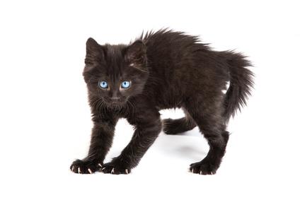Katze mit erhöhtem Arousal. Videospiele können ähnliches bei Jugendlichen auslösen